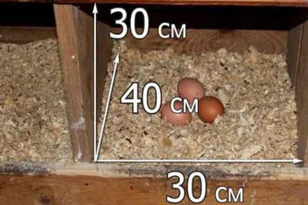 Гнездо для курицы