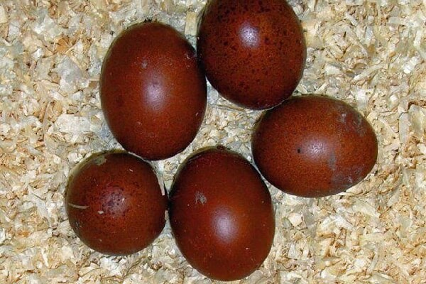 Особенности яйца