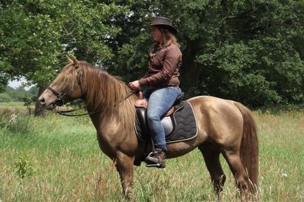 Эксплуатация лошадей канадский иноходец