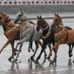 Ахалтекинские лошади разных мастей