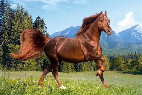 Дикие лошади скалистых канадских гор фото