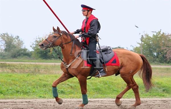 Для казака порода лошадей
