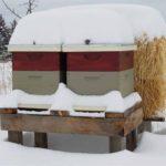 Работы по подготовке пчел к зимовке