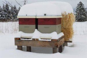 Подготовка пчел к зиме на улице