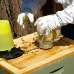 Подкормка пчел осенью сахарным сиропом