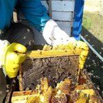 Подготовка пчелиного гнезда к зиме