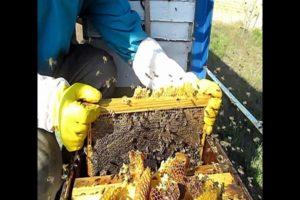 Правильная подготовка пчел к зимовке