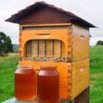 Рекомендации по разведению и содержанию пчел для новичков