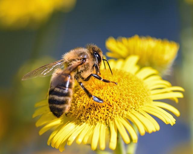 Пчела фото