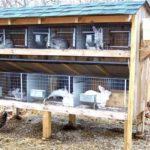 Выращивание и уход за кроликами: c чего начать и какую выбрать породу