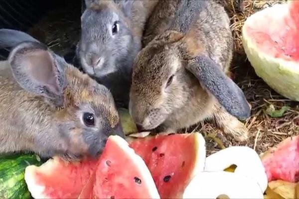 Вкусное для кроликов