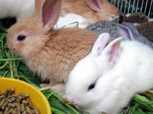 Комбикорм для декоративного кролика
