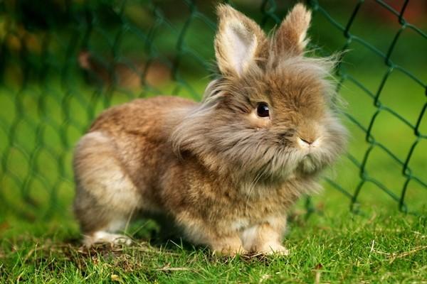 Кролики мини
