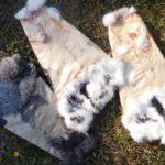 Выделка кожи – искусство кролевода
