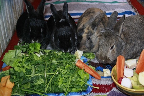 Питание кроликов