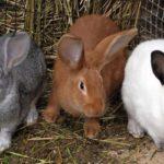Разведение и выращивание кролей