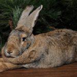 Кролики и их породы