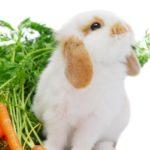 Уход за кролями