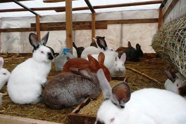 Зерно кроликам