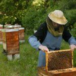 Разведение пчел для новичков