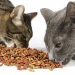 Как часто давать котам сухой или влажный корм