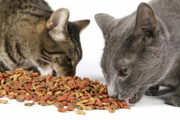 Сколько кормить котов сухим