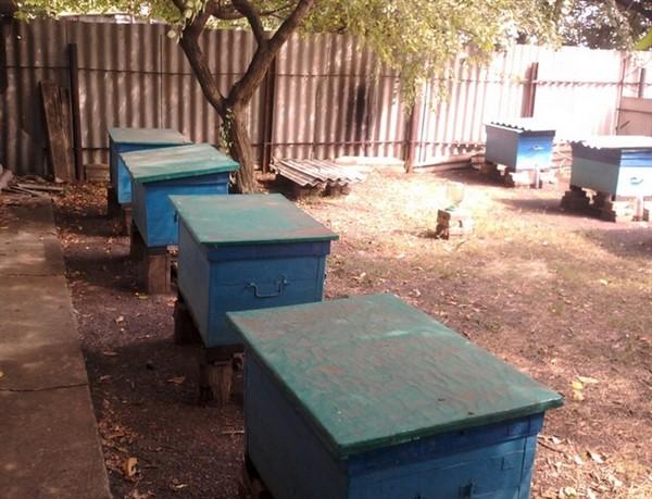 Как начать разводить пчел