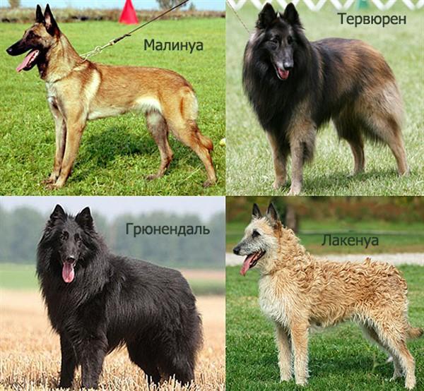 Четыре типа породы