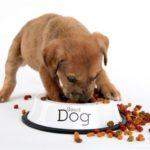 Каким кормом лучше кормить щенков – крупных и мелких пород