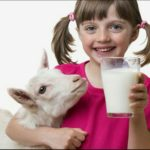 Полезные и лечебные свойства козьего молока