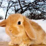 Клички для кроликов – мальчиков и девочек
