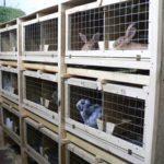 Строительство клетки для кроликов своими руками