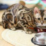Какой состав сухих кормов для кошек – описание содержимого