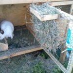 Самодельные виды кормушек для кролей своими руками