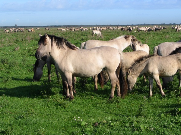 Табуны диких лошадей