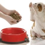 Для собак – рейтинг сухих кормов разного класса