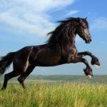 Сколько в среднем весит лошадь – как узнать