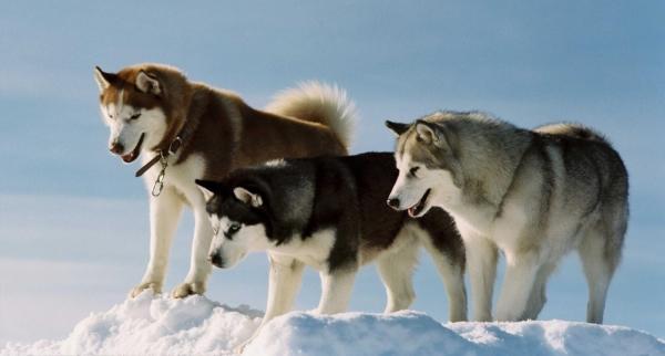 На территории Аляски