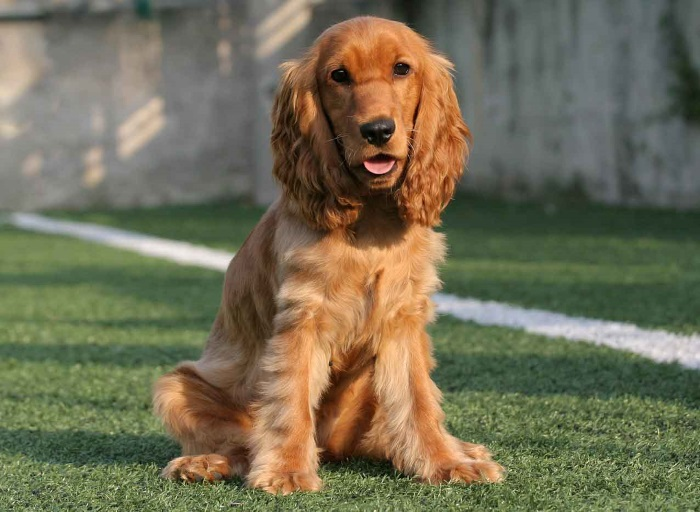 Дружелюбная собака