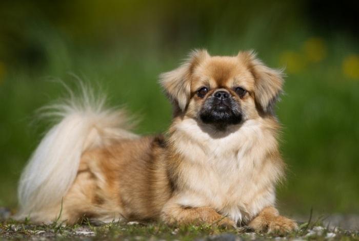 Внешний вид собаки
