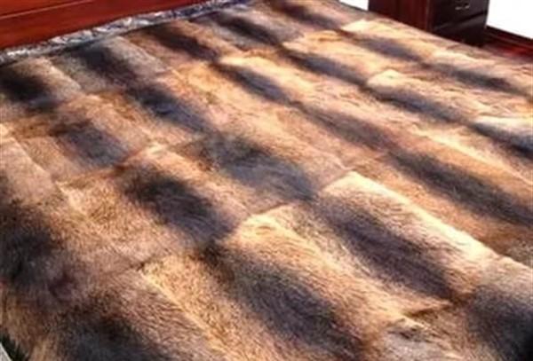 Как подстригать мех нутрий в домашних условиях