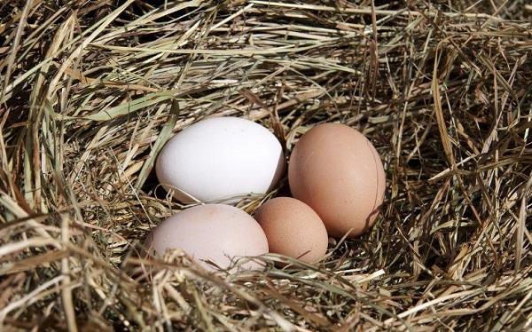 Что делать если несушки несут маленькие яйца