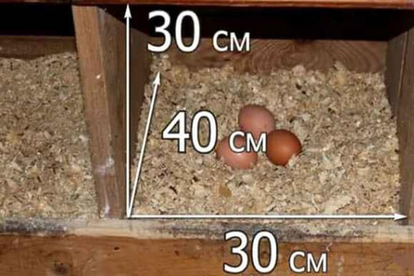 Простые гнезда для кур