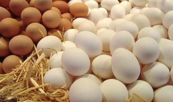 Сколько времени курица сидит на гусиных яйцах