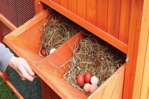 Гнезда для кур