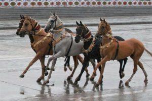 Экстерьер Ахалтекинских лошадей фото