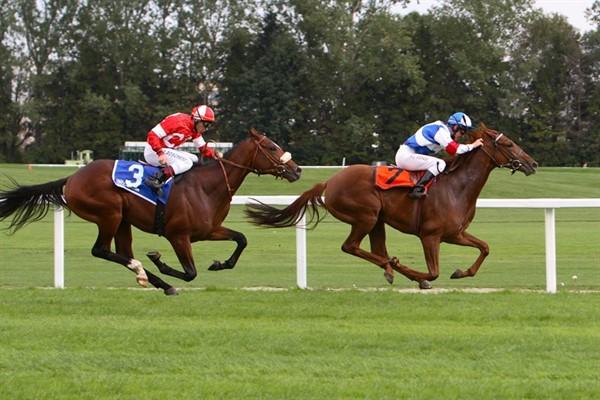 Скорость лошади иноходца