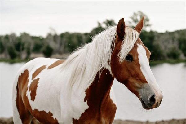 История пегой лошади описание