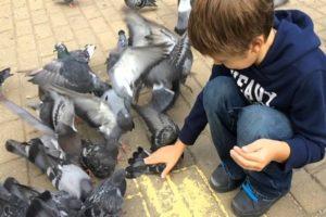 Поймать голубя на улице руками