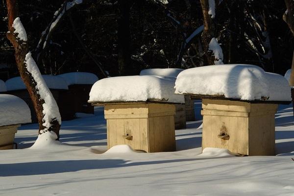 Пчелы в зимний период